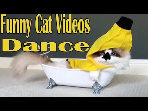 Funny Cat Videos 2016   Funny Cats Compilation 2016   Best Funny Cat Videos Ever  Funny Vines #1