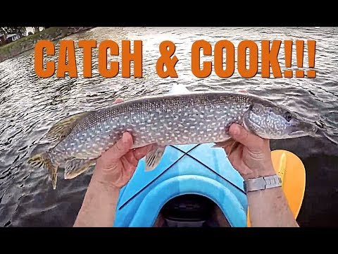 CATCH & COOK QUEBEC PIKE!!! Viva Frei's Fish Cakes [THROWBACK THURSDAY]