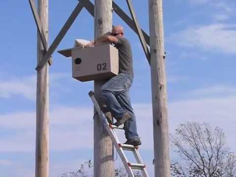 Barn Owl Nest Box Raising