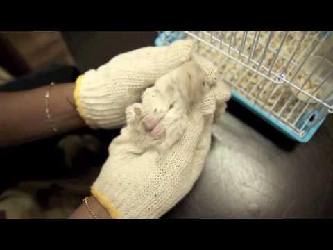 PET101 - Hamster And Rabbit Gender Identification