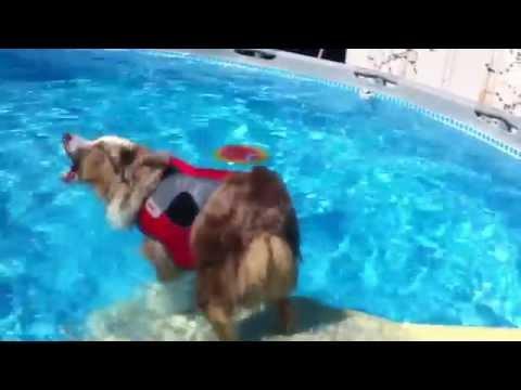 Dog Above Ground Pool Ramp Demo