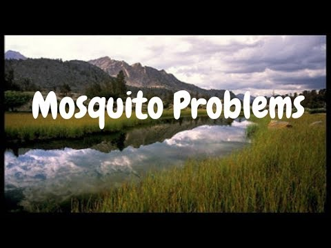Mosquitoes In The Pond? Now what?