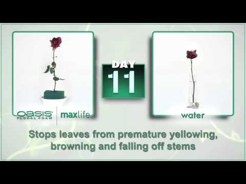 Introducing OASIS Floral Foam Maxlife!