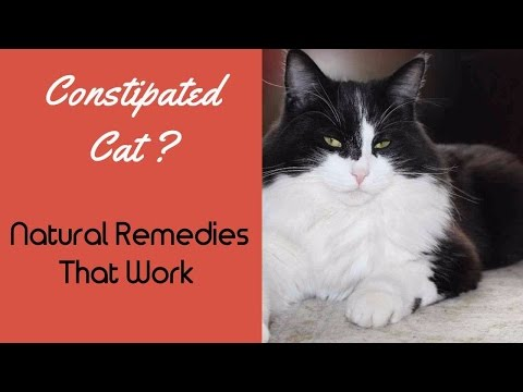 Constipation In Cats: Effective Natural Remedies