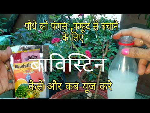 How to remove fungus from plants/Uses of Bavistin / fungicide ( Hindi, Urdu)