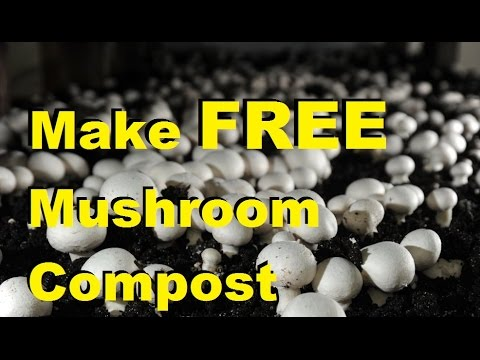 How To Grow Mushrooms & Make Mushroom Compost at Home for FREE!