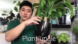 My Top 5 Indoor Plants