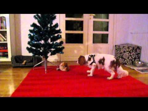 Dog Scared of Christmas Tree