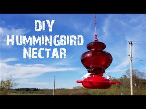 DIY Hummingbird Nectar 🐦