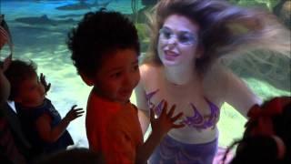 Silverton Casino/Lodge Playful Mermaid