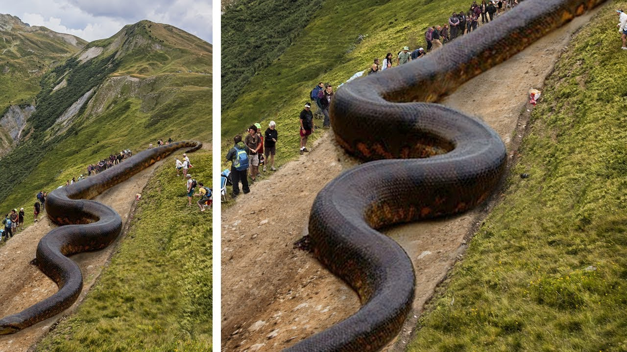 10 Biggest Snakes Ever Discovered