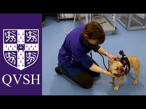 Dog Breathing Assessment (Cambridge BOAS research group)