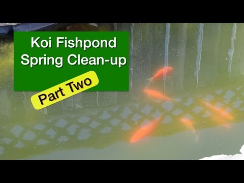 Koi Fishpond Spring Clean-Up Part 2