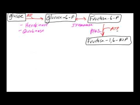 Glycolysis Made Easy