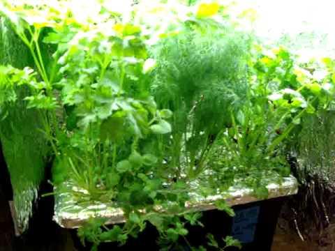 Final Update on indoor hydroponic kitchen herb garden.