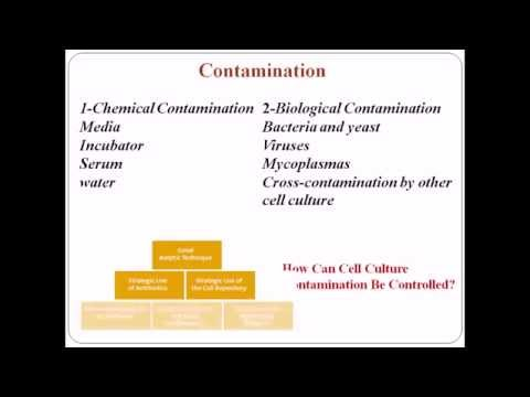 Animal cell culture 11 - contamination by bacteria and yeast