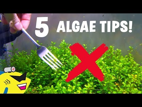 5 EASY TIPS To ELIMINATE ALGAE In Your Aquarium!