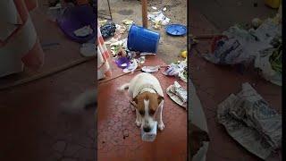 Guilty Trash Dog