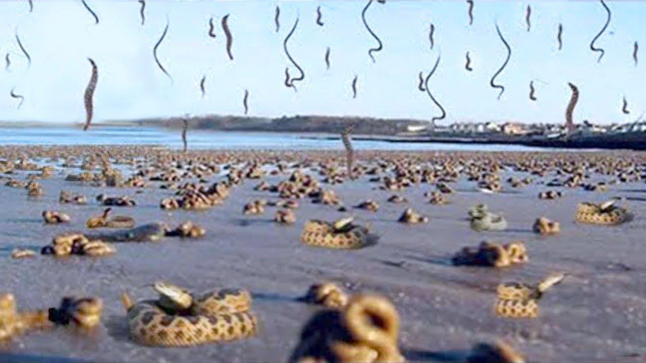 15 Strange Animal Phenomena That Happened On Earth
