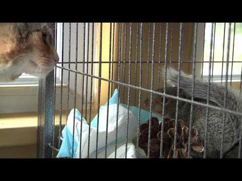 Rescued Baby Squirrels