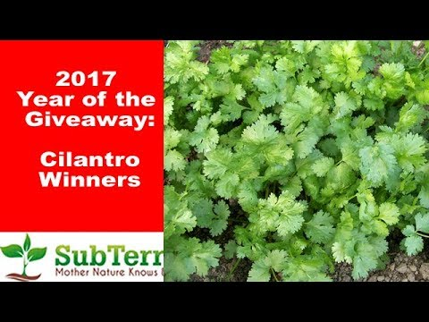December Cilantro Winners