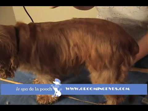 How to Groom A Cocker Spaniel-Trim with Andis Clippers