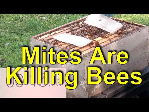 Formic Acid Mite Control For Beekeeping - 60 Sec Beekeeper Episode 11