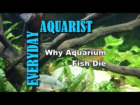 3 Reasons Why Aquarium Fish Die