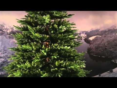 National Tree Fraser Fir Deluxe 7 ft