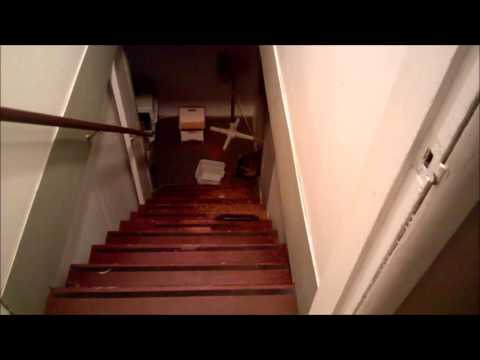 Raccoon eating cat food in the basement