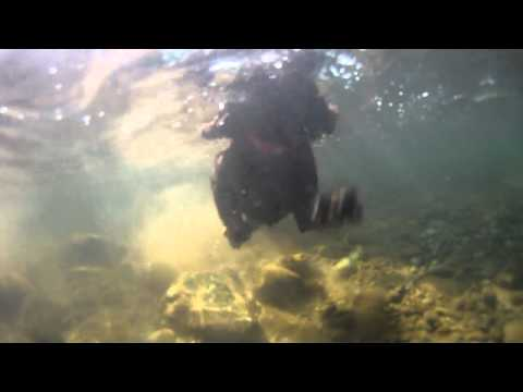 Phoebe attacks under water camera