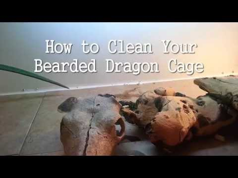 How to Clean a Bearded Dragon Cage
