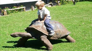 Cute Babies and Tortoise Become Friends 😂 A Baby And A Cat Play Extremely Funny