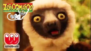 Zoboomafoo | Episode: New Animals With Lemur! | Animals For Kids