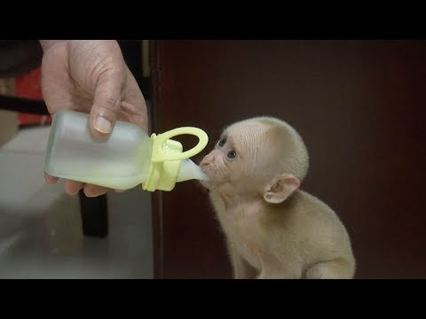 Cute baby monkey rescued after being found alone in east China
