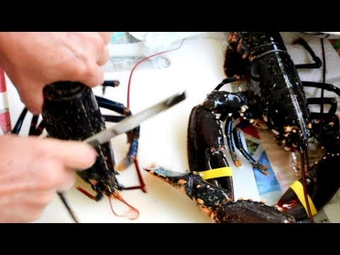 EXTREMELY GRAPHIC: Live Lobster Cantonese Style - Ginger and Onion Lobster