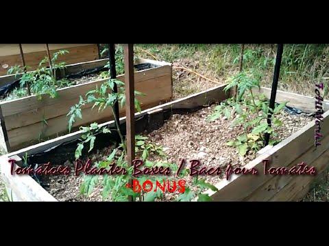 41-How to make tomatoes planter boxes /Comment faire des bacs a tomates +BONUS