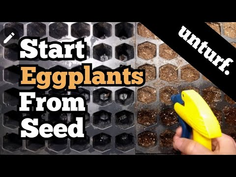 Starting Eggplant Seeds