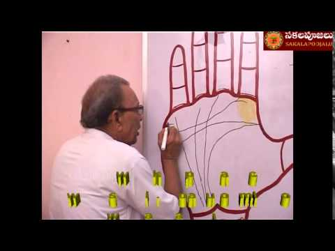 PALMISTRY PART   25 IN HINDI