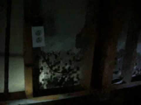 Mold Living Behind Walls_1111.wmv