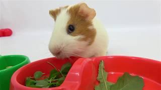 Learn Colors  Вкусняшки  для Свинки  Учим Цвета Развивающие мультики для малышей и детей Colours Pig