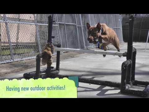 Adopt A Dog Has Spring Fever