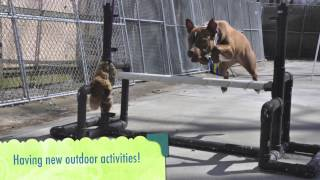 Adopt A Dog Has Spring Fever