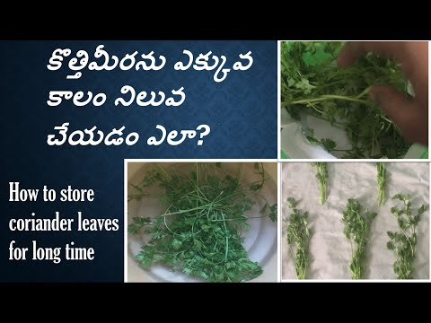How To Store Kothimeera In Telugu | How to Store Coriander (Cilantro) Fresh For Long Time (Eng Sub)