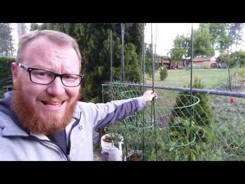 Graham's Garden Allotment update (#55)