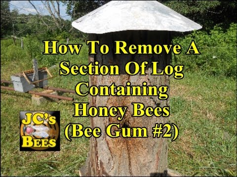 How To Remove A Bee Log (Bee Gum #2)