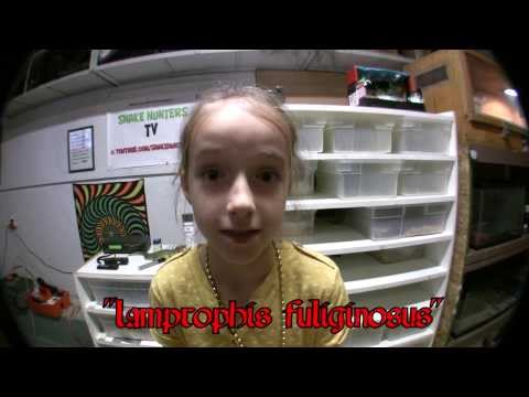 African House Snake (FEISTY) : [KRiSTA's WiKi SHOW]