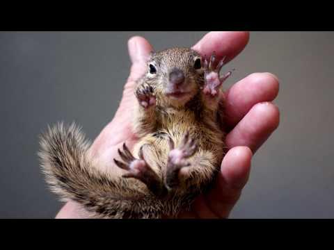 Baby Squirrel Nesting Box