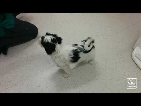 Puppy Training Video with Radley