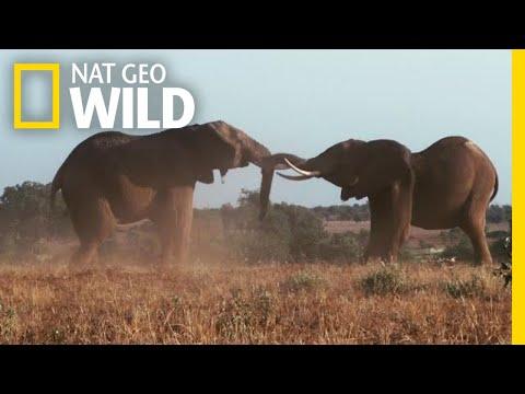 For Elephants, Two Seasons Reign Supreme | Nat Geo Wild